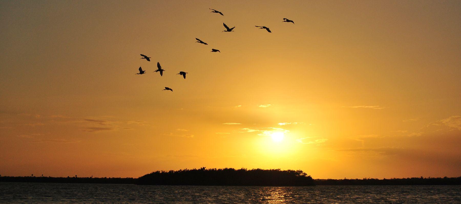 BIRDSSUNSET